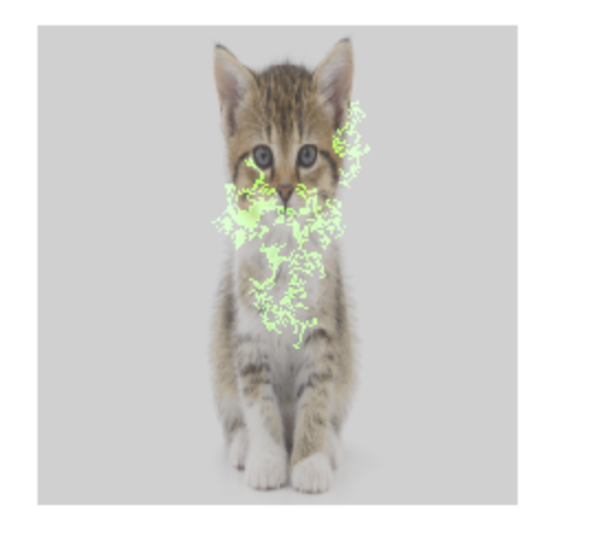 A photo of a cat with feature attribution overlay