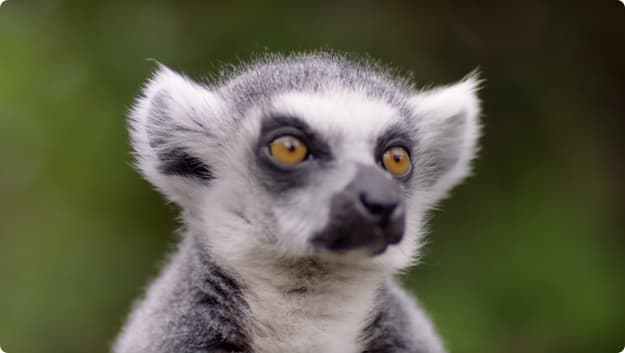 Zoological Society video thumbnail