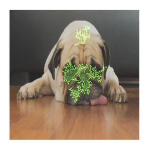 Una foto de un perro con superposición de atribución de atributos