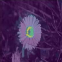 Ein Foto eines Gänseblümchens mit Feature-Attributionsoverlay