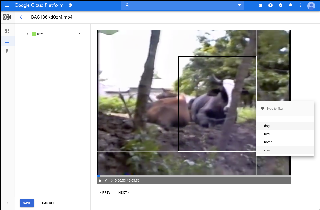 Drawing bounding box around cow in a video